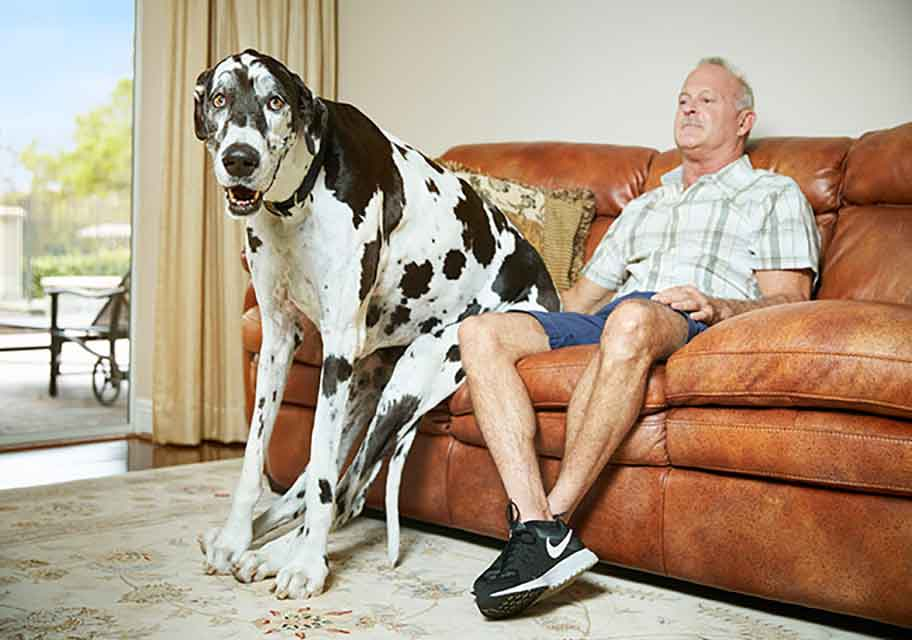 Lizzy the biggest female dog in the world Guinness World Records