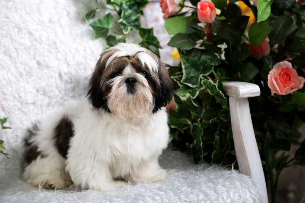best dog breeds apartment