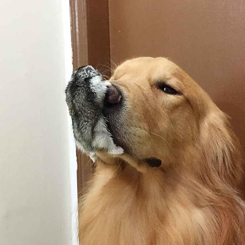 animal friendship bob dog birds hamster golden retriever