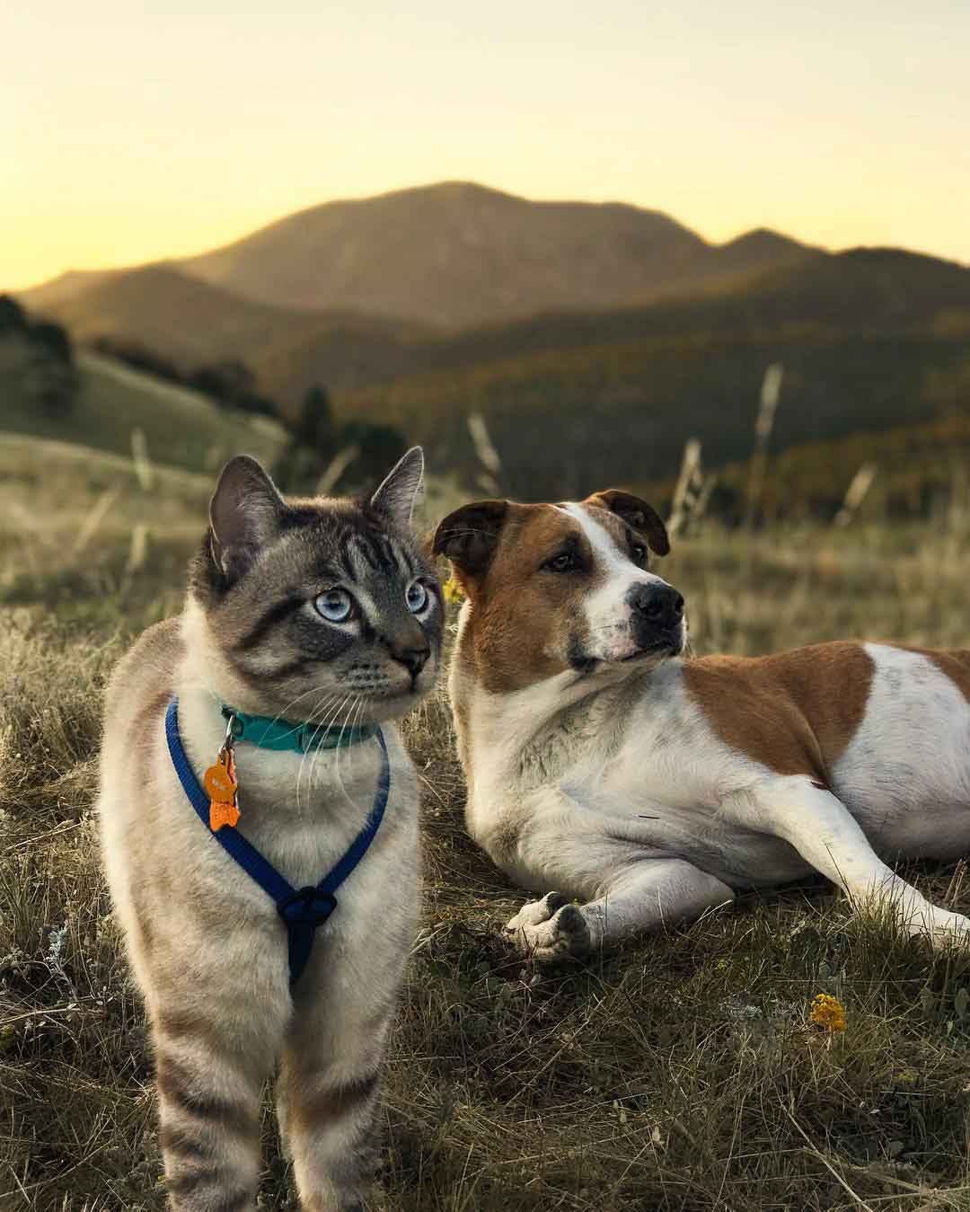 cat dog travel together Henry Baloo Cynthia Bennett Andre Sibilsky