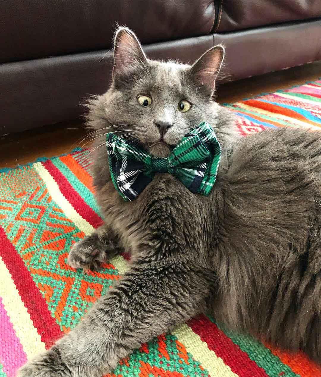 Belarus Adorable Cross-Eyed cat Instagram