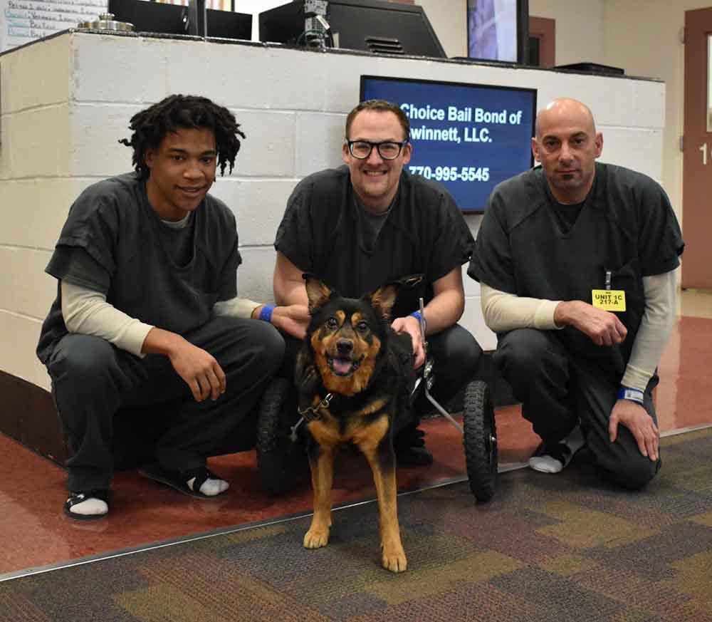 Bandit disabled dog adopted