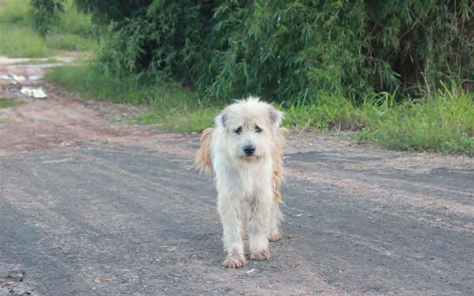 BonBon dog waited four years