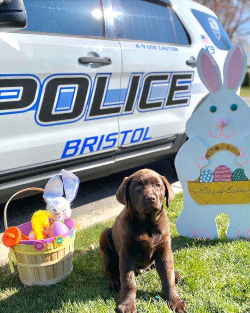 Brody Lazy Police Puppy