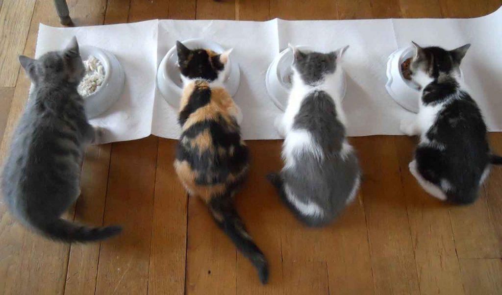 Change cat food