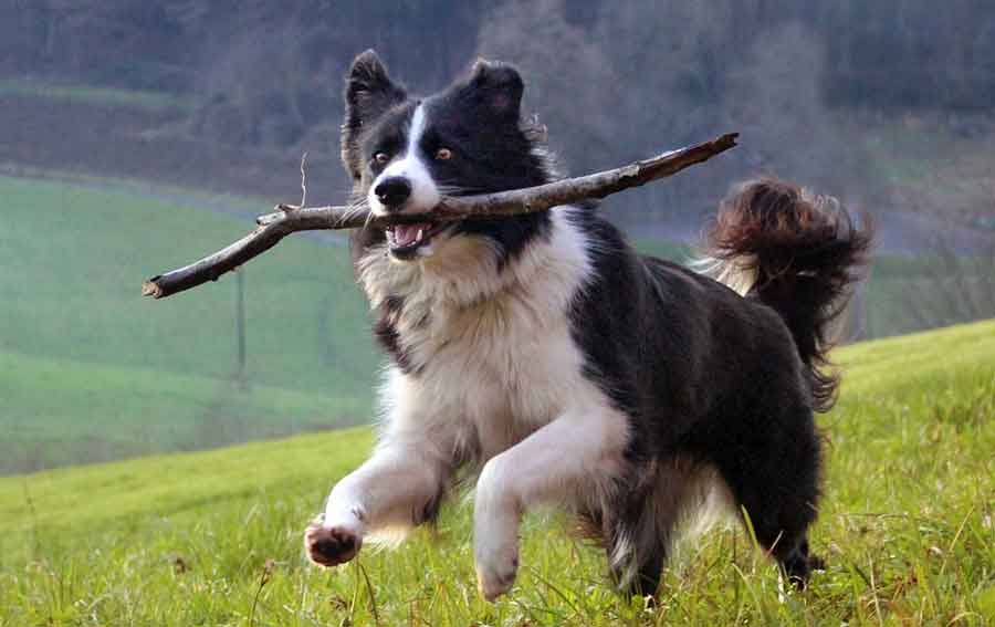 amazing curious facts dogs