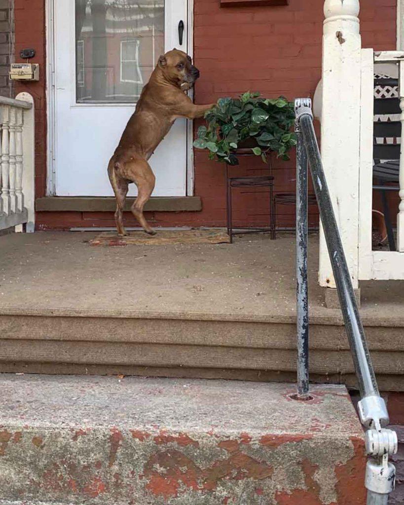 Cupid dog waited home weeks family left