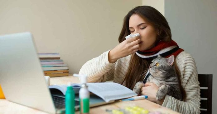 Dealing with allergies to cats