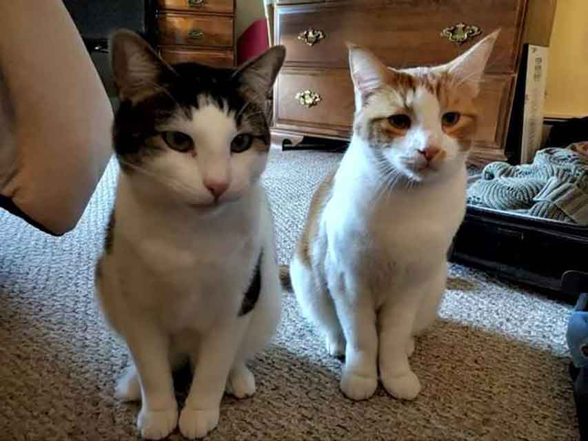 Dwight cat abest friend shelter