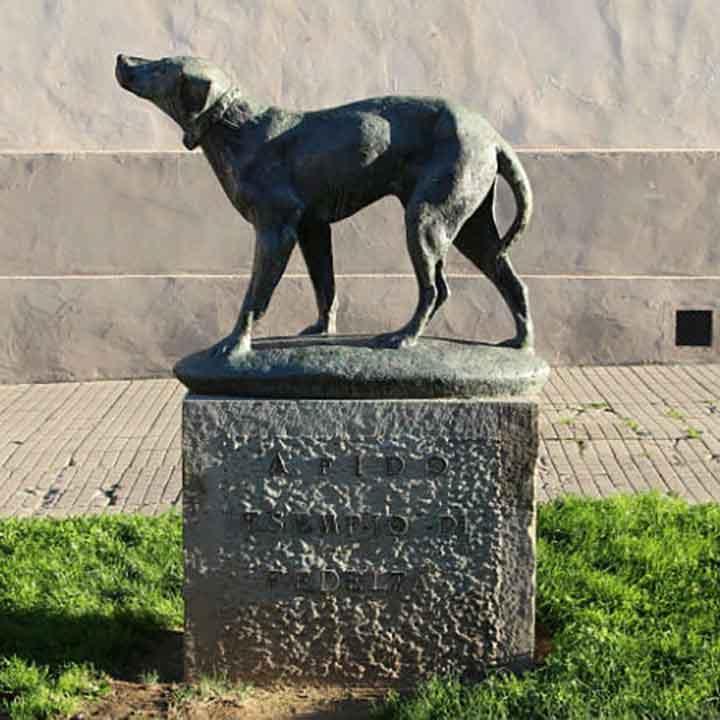 Fido faithful Italian dog 14 years