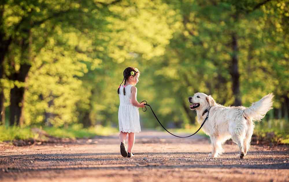 smartest dogs Golden Retriever