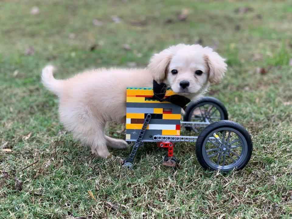 Gracie boy creates wheelchair Lego Disabled Dog