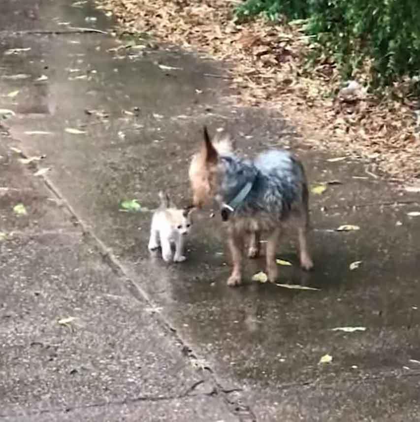 Hazel dog rescues abandoned kitten