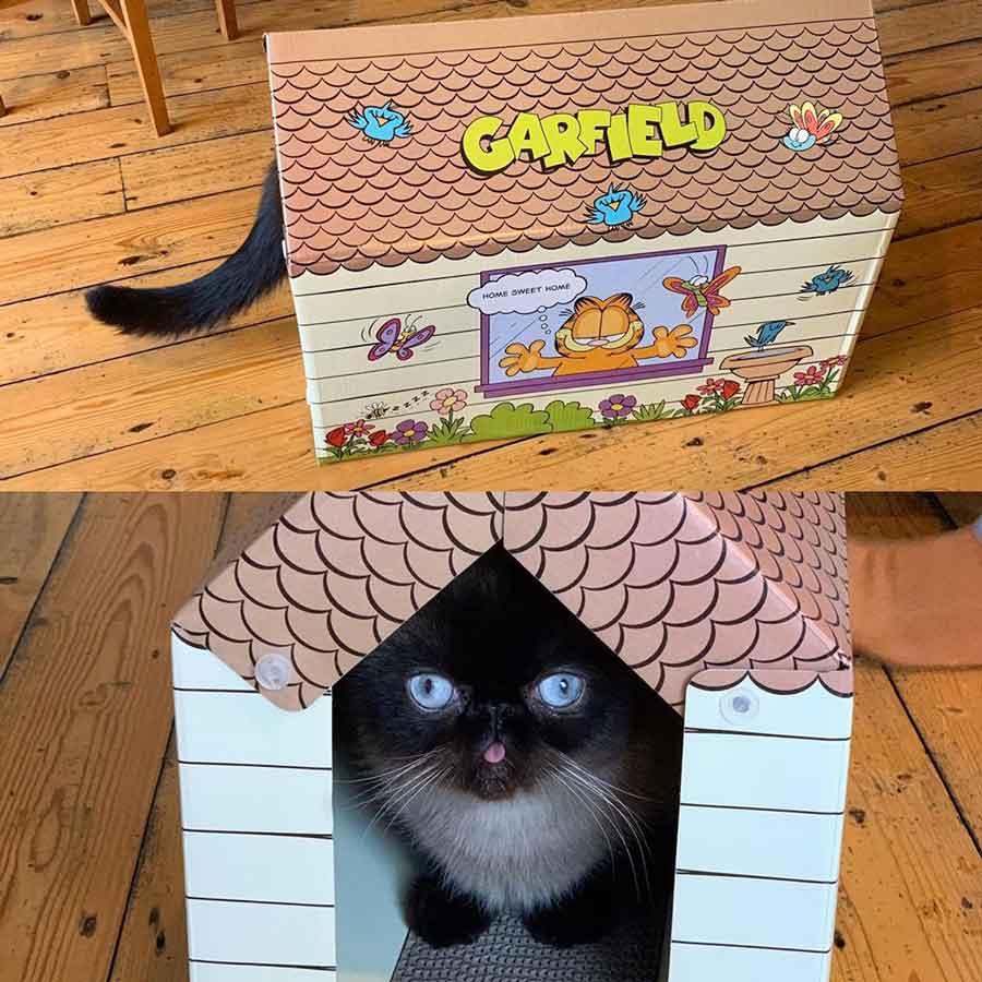 Ikiru cat King Of Bleps