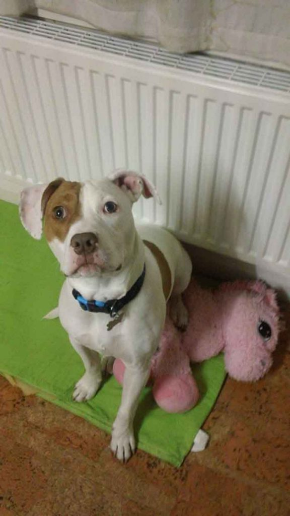 Ivor dog abandoned 5 times