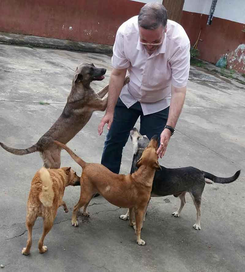 João Paulo Gomes priest brings stray dogs mass