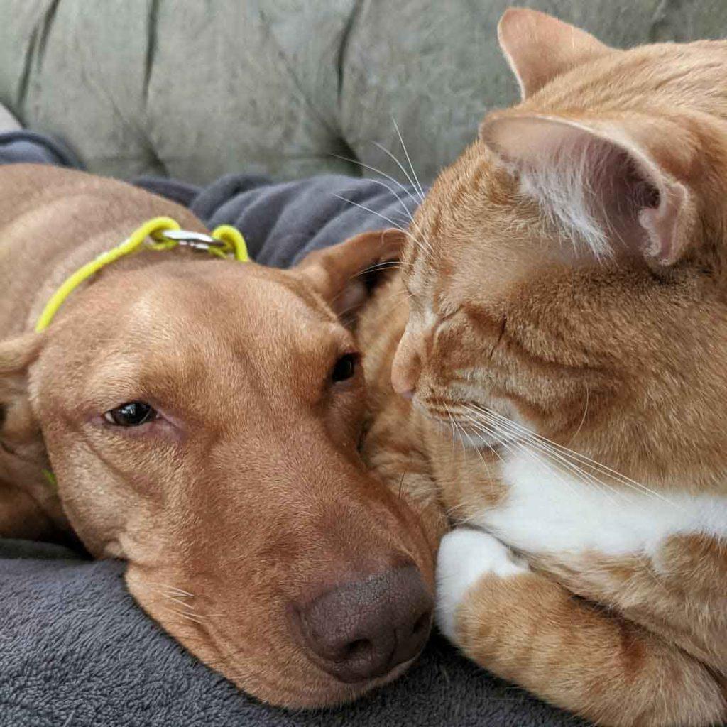 Joule Kelvin camera cat comforting dog