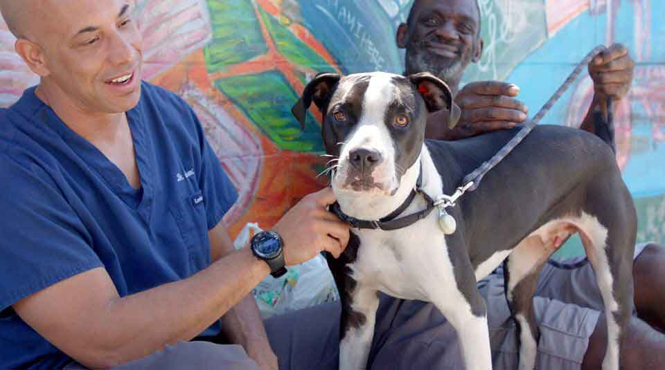 Kwane Aveterinarian examines stray animals free