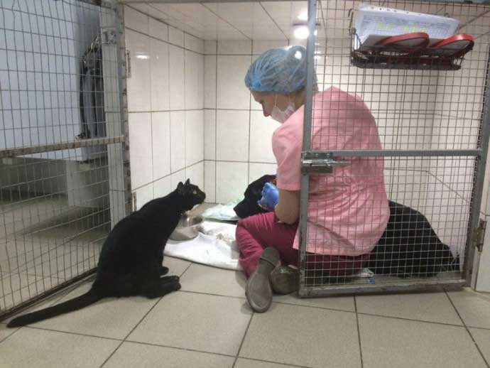 Lucifer paralyzed cat