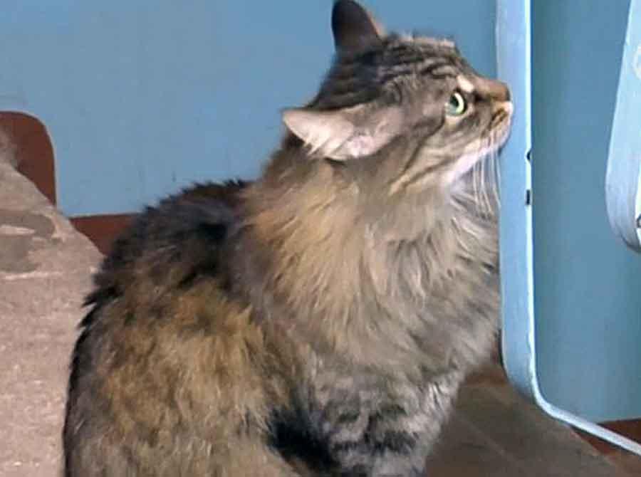 Masha Street cat rescues abandoned baby