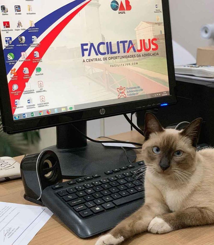 cat leon employee order lawyers brazil