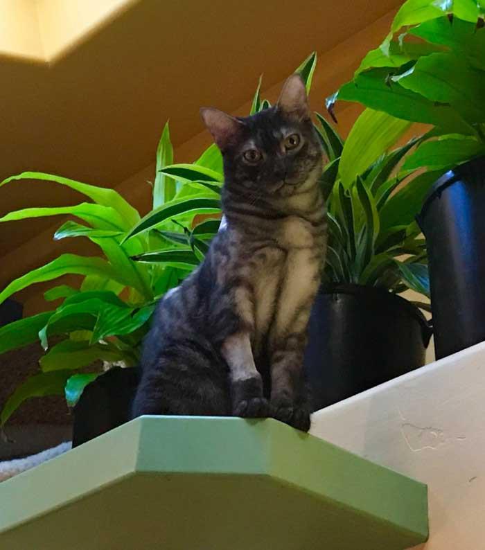 Peter Cohen man home cat paradise