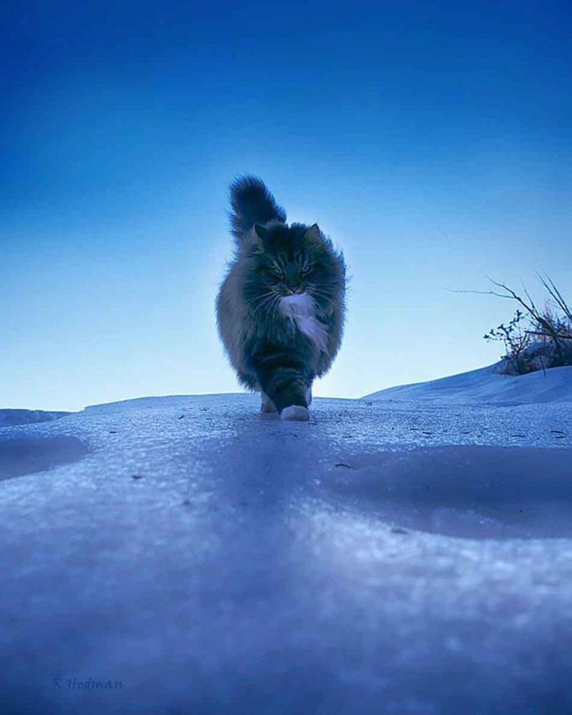 Photos Finnish Cats