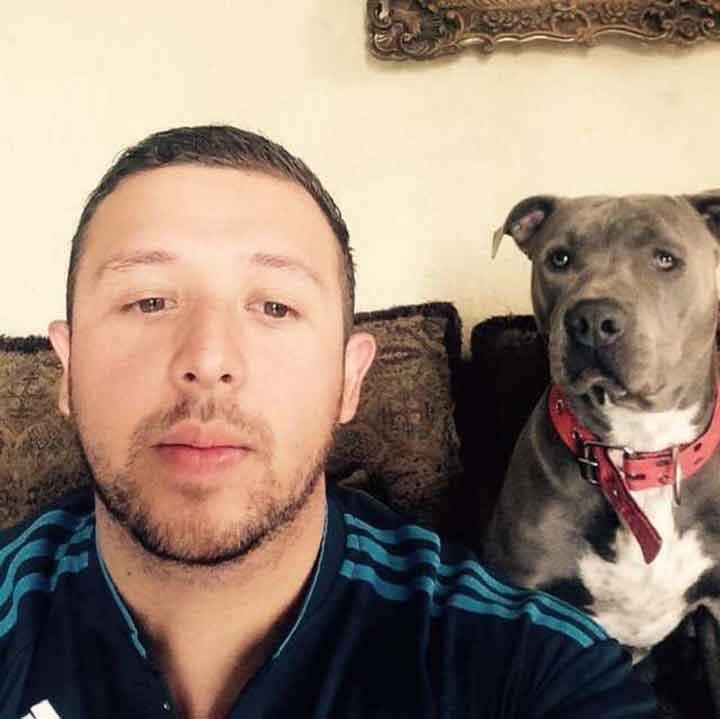Pit bull Hades invites pregnant stray cat give birth (2)