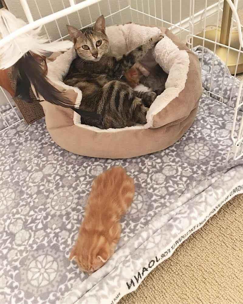 Alissa Smith Stray cat returns pick kittens taken shelter