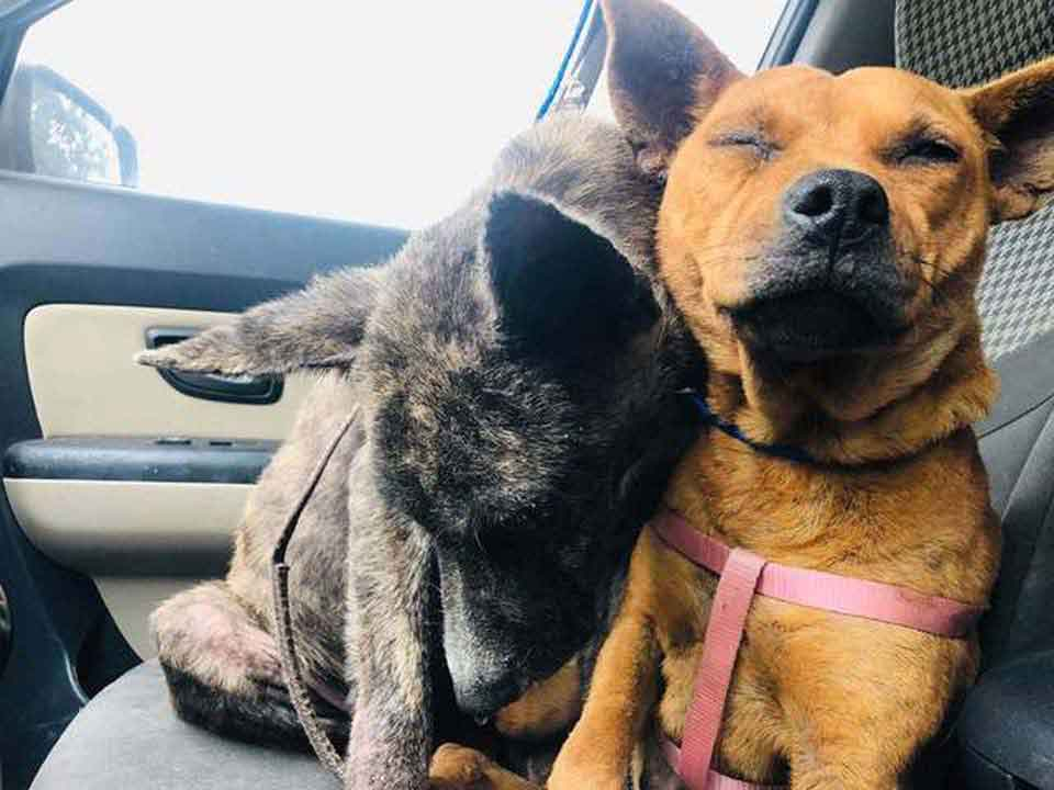 Two abandoned frightened dogs comfort abandoned