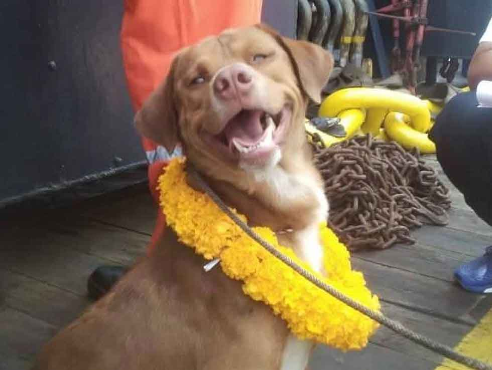 Vitisak Payalaw dog found saved 220 Km from coast
