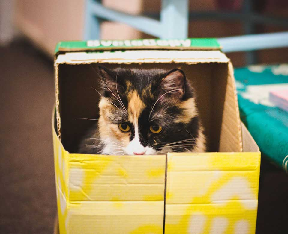 cats like boxes reduce stress