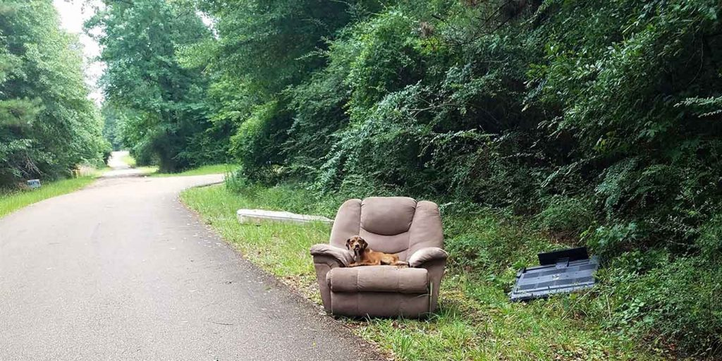 dog abandoned armchair television
