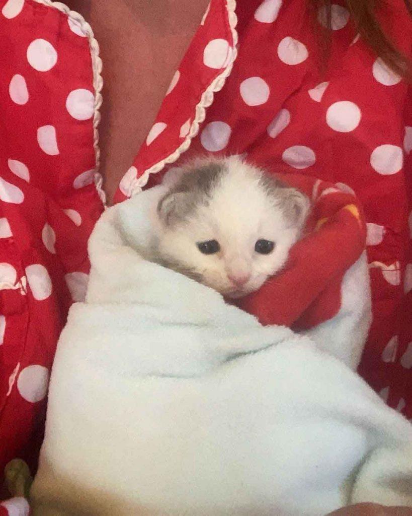 dog stray kitten found alone farm Morgan Polly Paxton