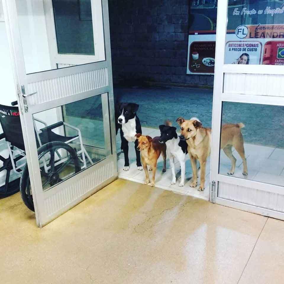 group dogs hospital homeless owner Cesar Cris