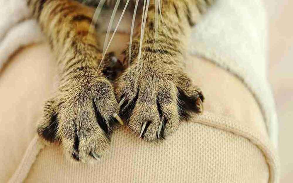 prevent cat scratching sofa