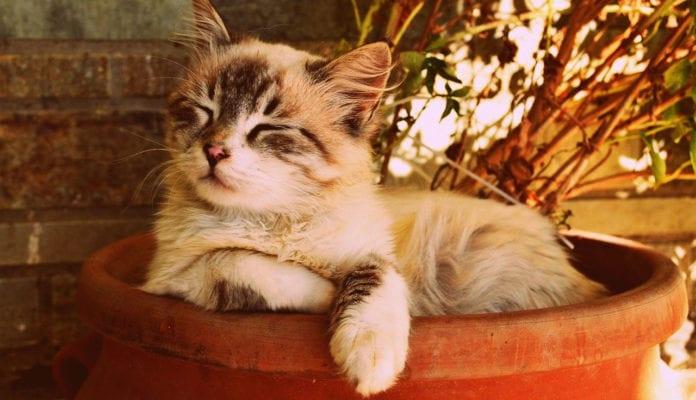 Cat neutering