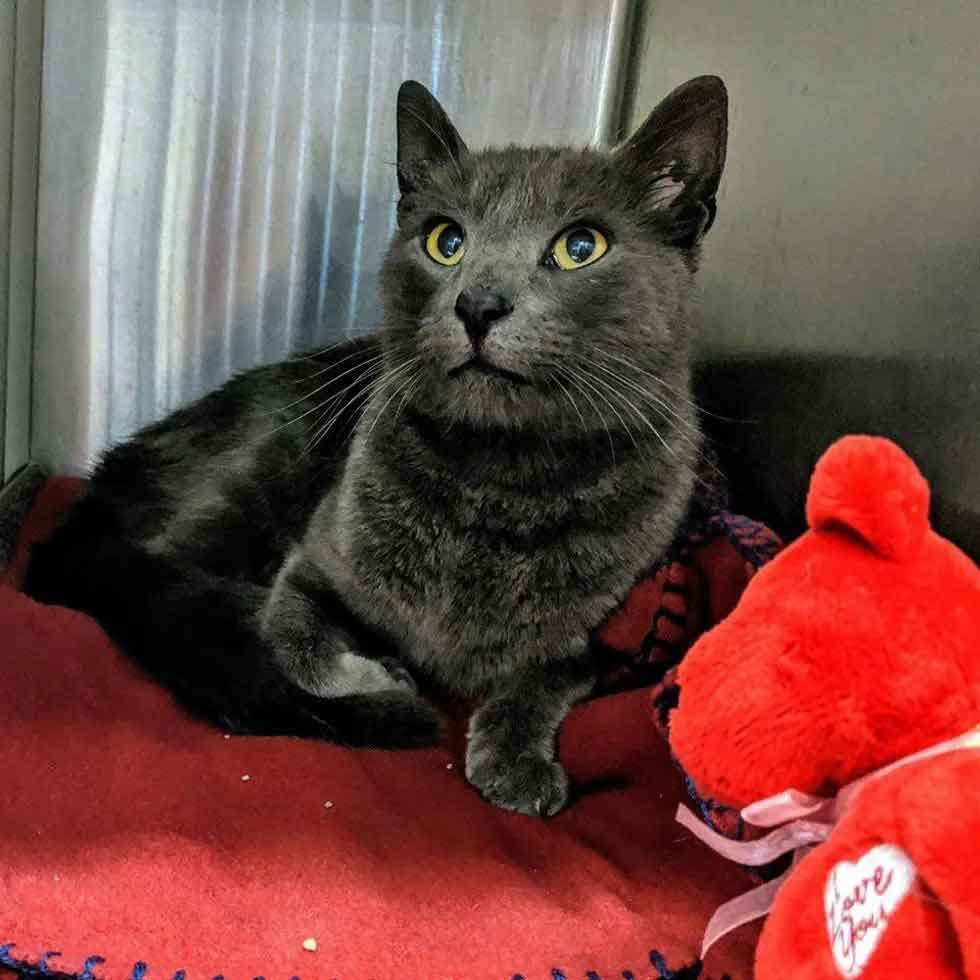 truck driver cries cat return after month search