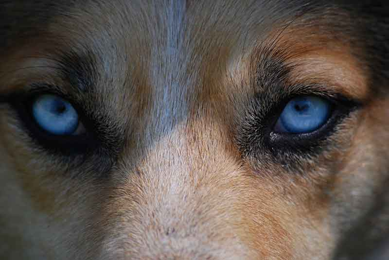 Amazing Facts About Dogs