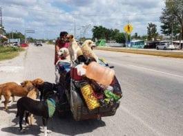 Edgardo Perros Zúñiga Mexico Man rescue stray dogs