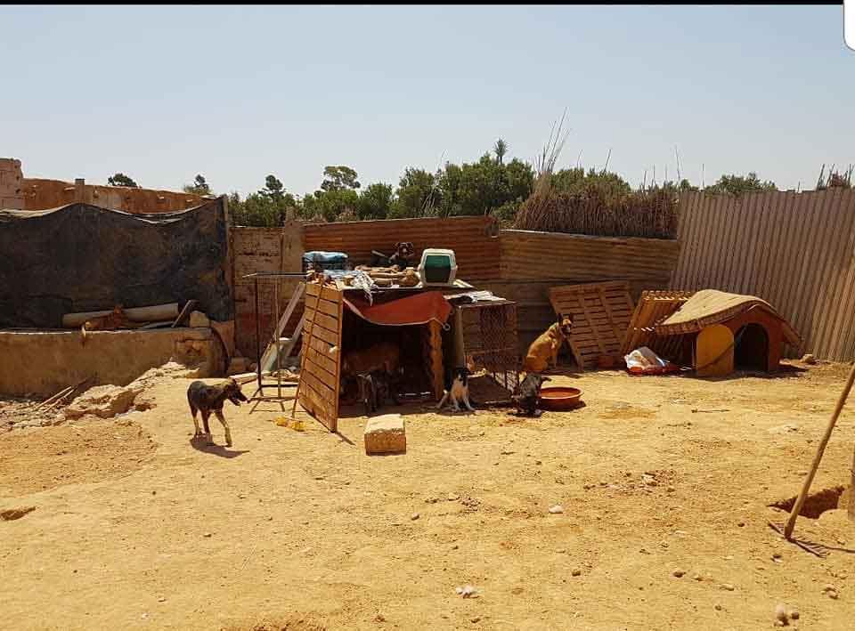 Morocco Amal SAFE shelter fight animal rights