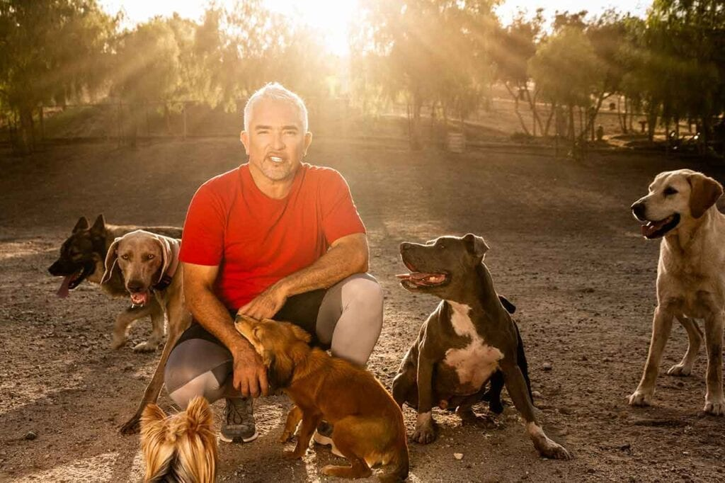 perfect dog Cesar Millan