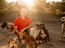 perfect dog Cesar Millan