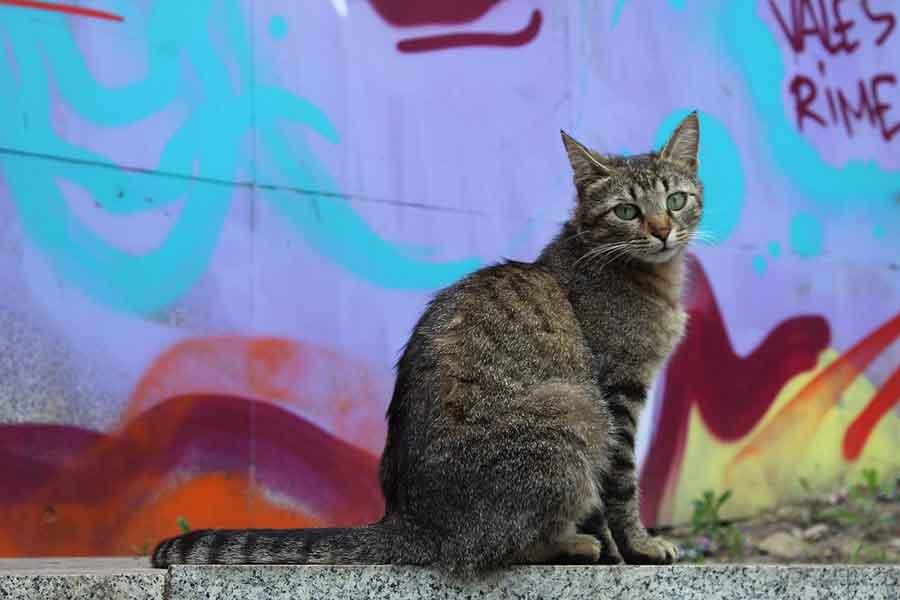 Spain fine € 30,000 aggression abandonment pets