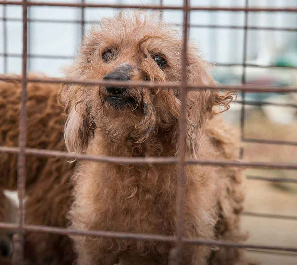 70 dogs rescued south korea