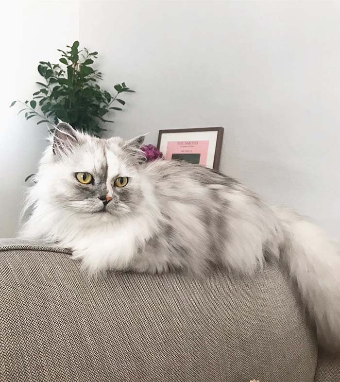 Alice Stunning Cats With The Most Beautiful Eyes