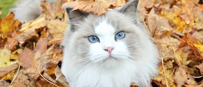 Aurorapurr Stunning Cats With The Most Beautiful Eyes