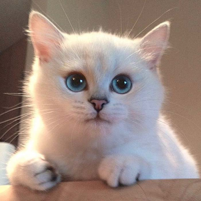 Coby Stunning Cats With The Most Beautiful Eyes