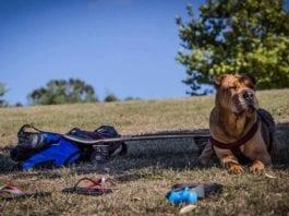 Dog breeds most health problems
