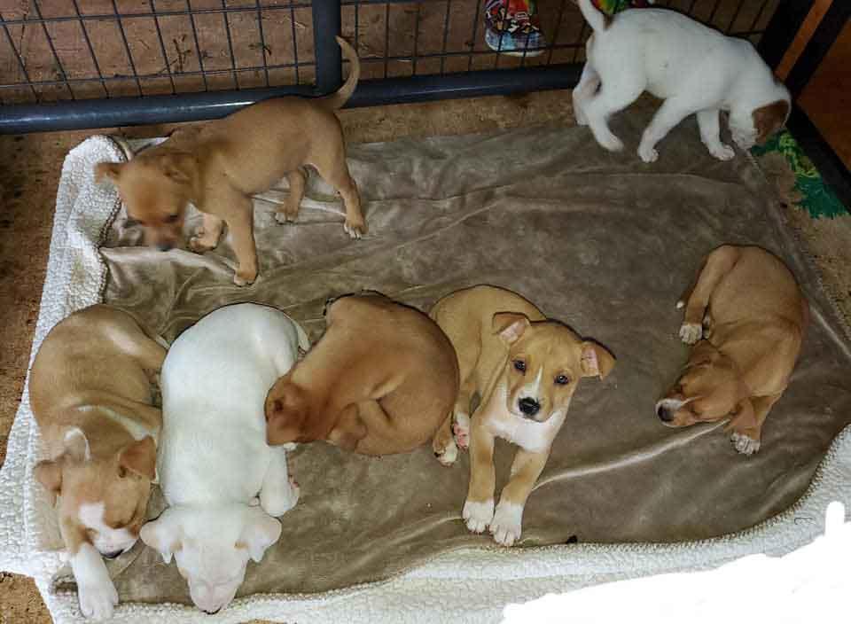 Dory dog nine puppies abandoned